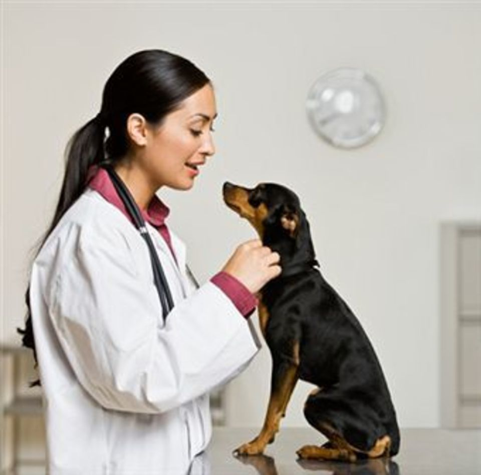 Veterinary Medical Care