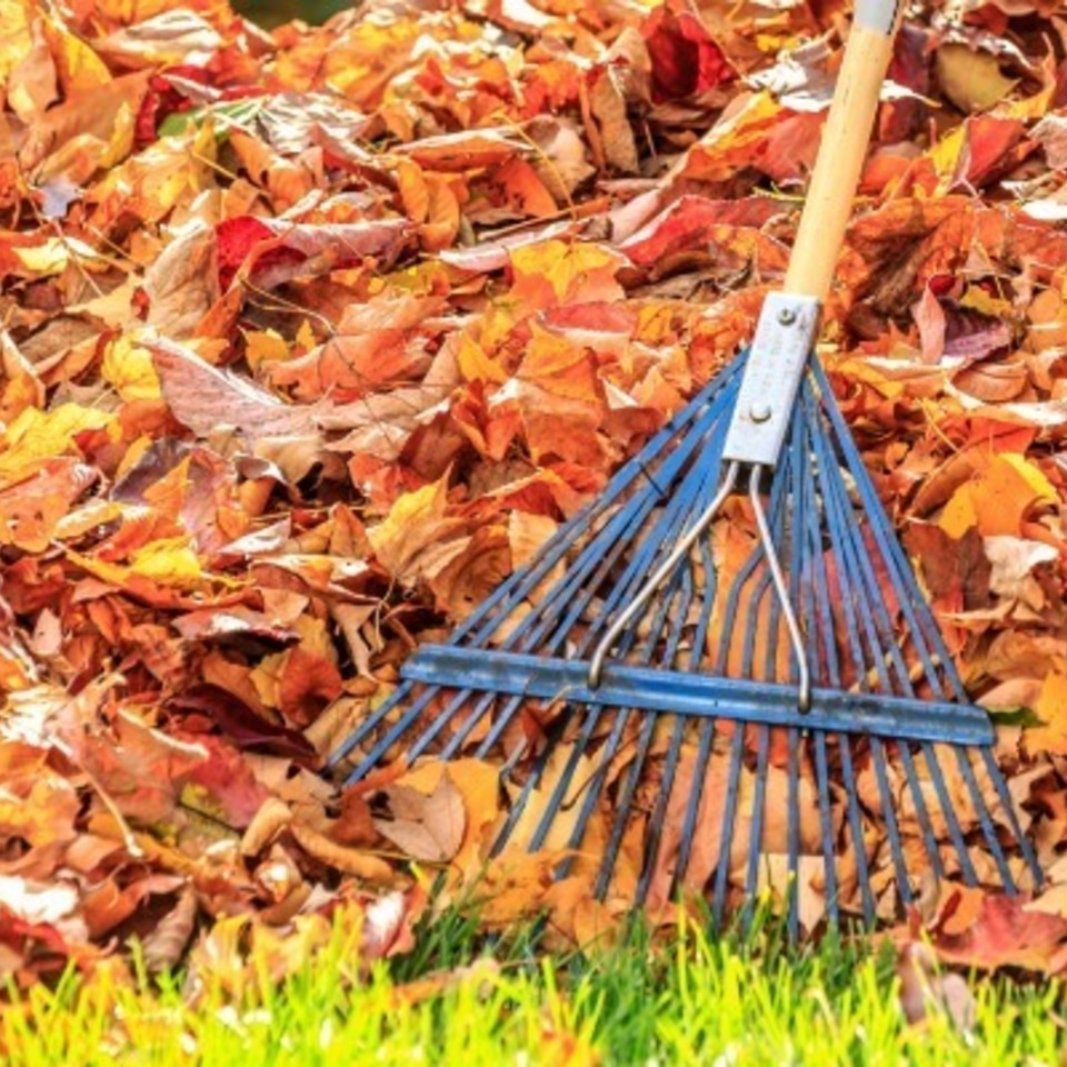 54ffb1ccea940 raking leaves de20170215 16656 1jio0g3