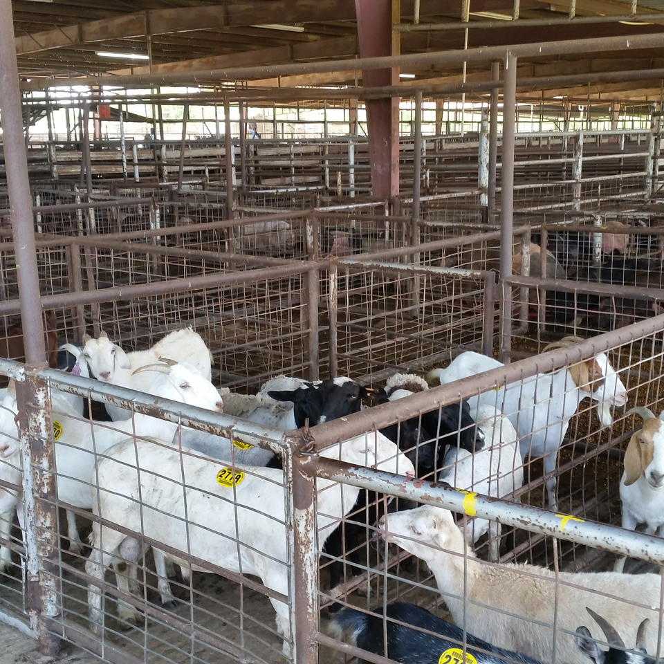 Atascosa Livestock Exchange