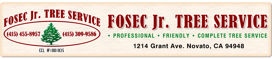 Fosec Jr Tree Service