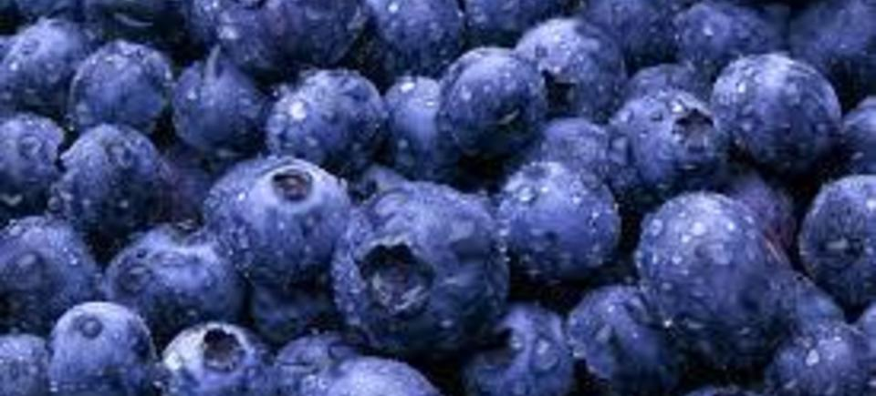 Blueberries20150722 20260 11hv201