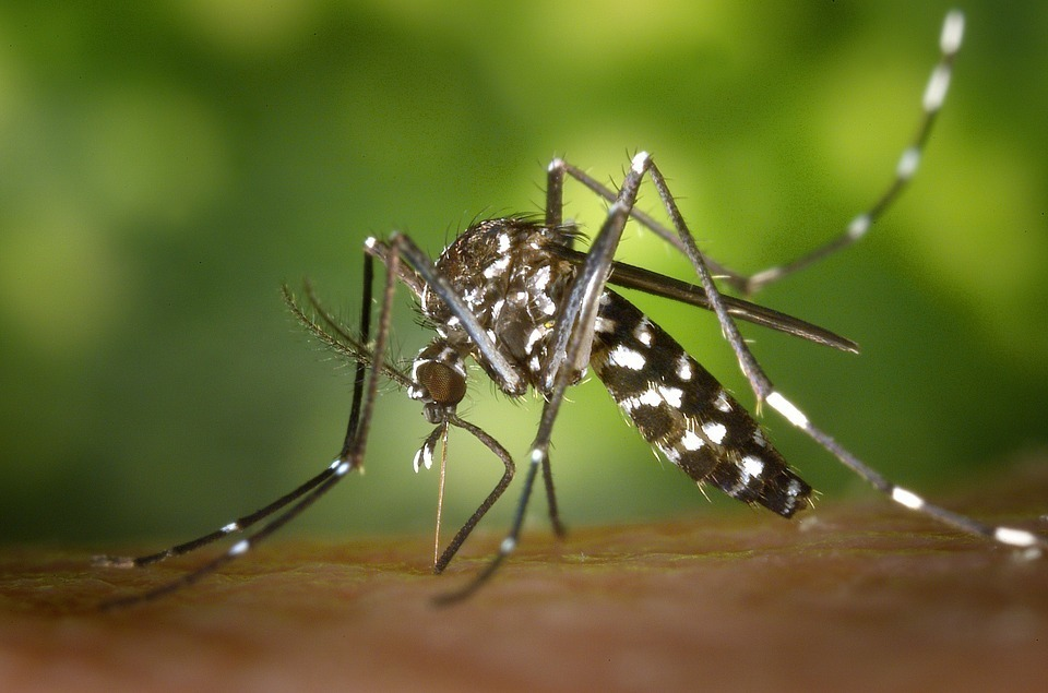 Tiger mosquito 49141 960 72020180118 19271 8soup6