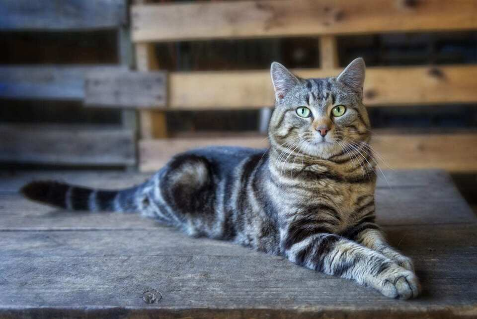 Working barn cat stock