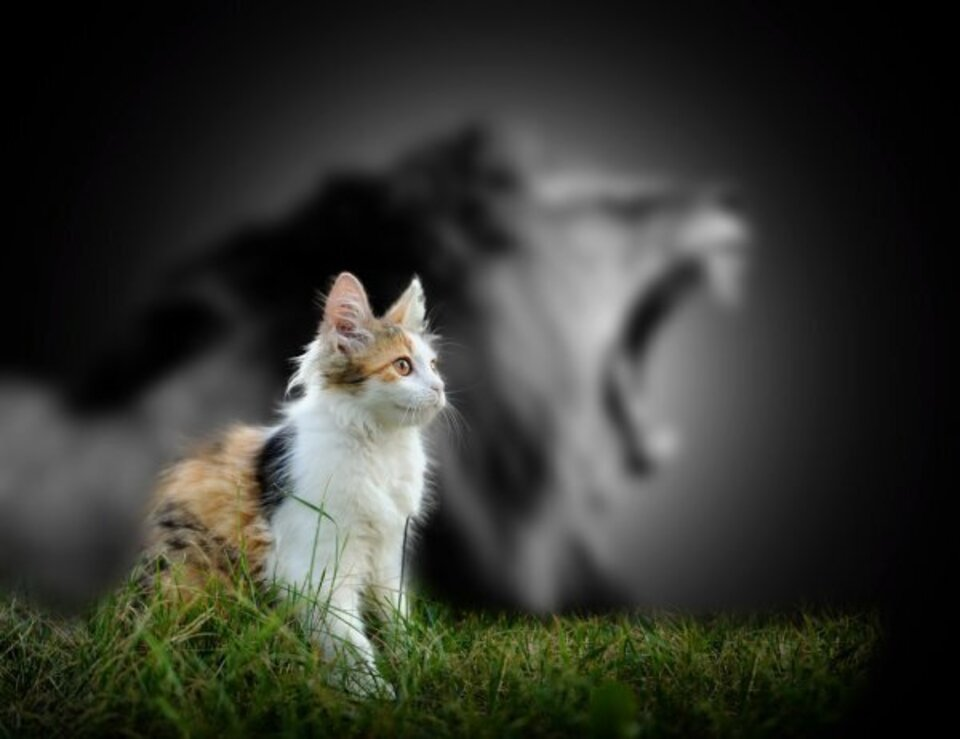 Depositphotos 91645726 stock photo cat with lion shadow