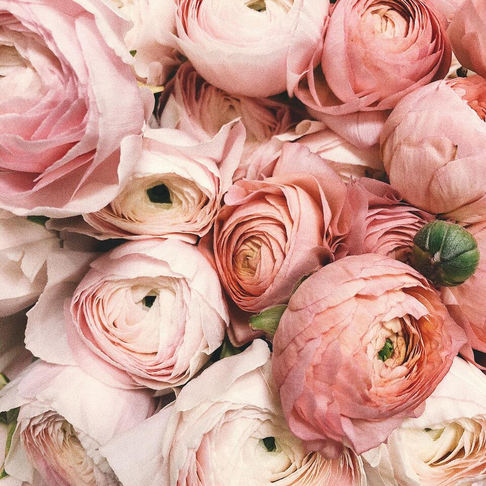 Weddingranunculus