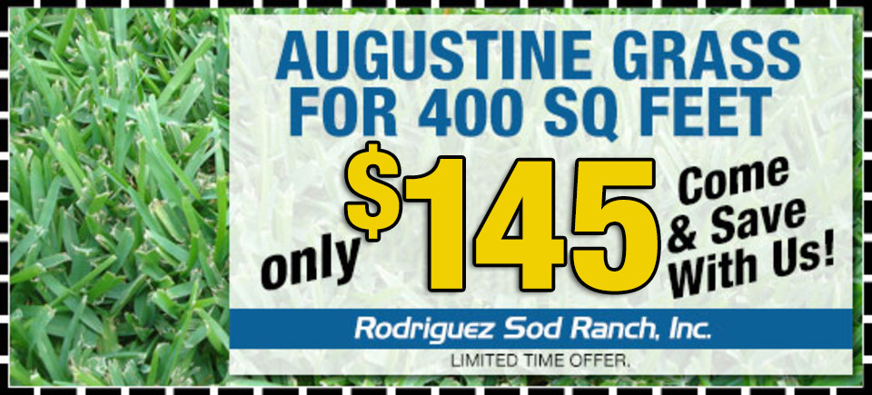 Rodriguez sod coupon14520160913 31850 18dighy 960x435