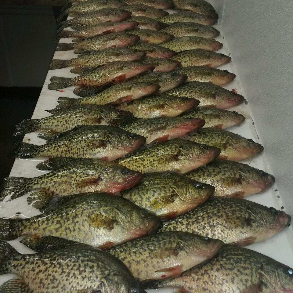 Crappies20151116 5266 nj1q10 960x960