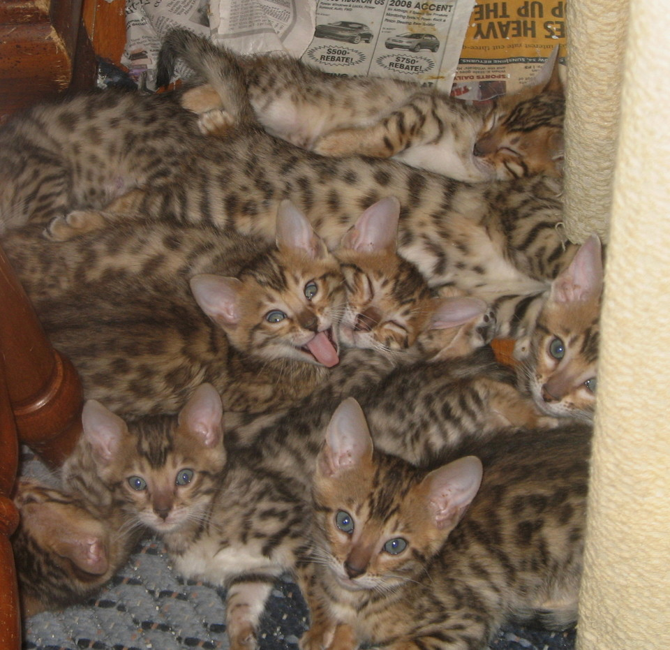How many kittens can you find?