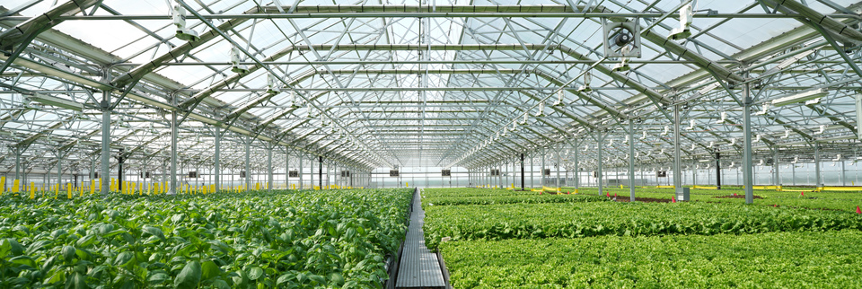 Tradepoint Atlantic industrial site goes green with hydroponics operation
