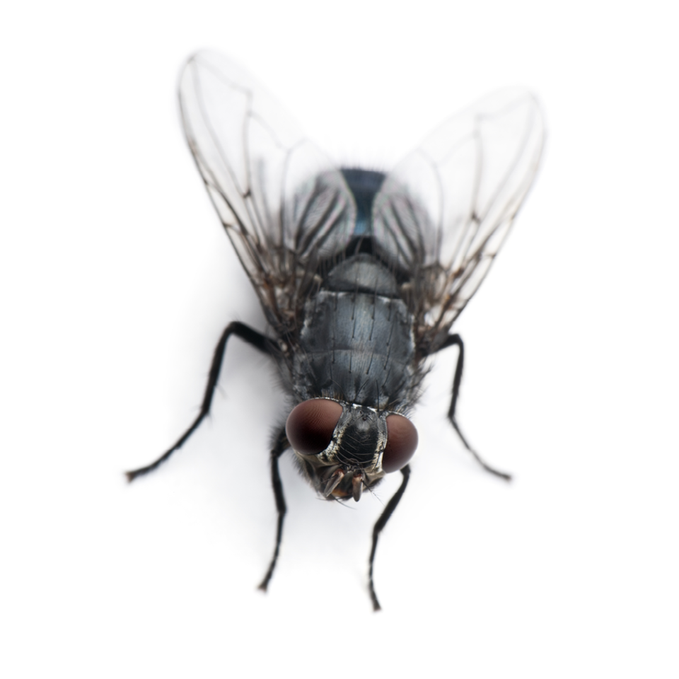 Flies gallery images3